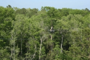 <h5>Zip Line Tours in Ocean Isle Beach #15</h5><p>                                                                                                                                                                                                            </p>