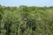 <h5>Zip Line Tours in Ocean Isle Beach #14</h5><p>                                                                                                                                                                                                            </p>