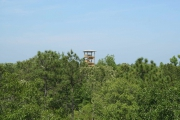 <h5>Zip Line Tours in Ocean Isle Beach #35</h5><p>                                                                                                                                                                                                            </p>