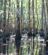 <h5>swamp boat tour</h5><p>                                                                                                      </p>