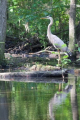 <h5>swamp boat tour #7</h5><p>                                                                                                      </p>