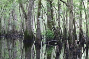 <h5>swamp boat tour #14</h5><p>                                                                                                      </p>